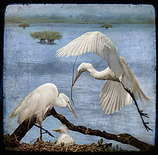 Peaceful Egret Family by Melinda Moore (Color Photograph)
