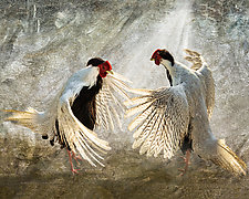 Silver Pheasants by Melinda Moore (Color Photograph)