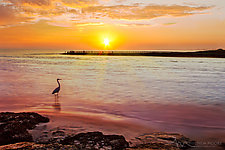 Sunrise with Heron by Melinda Moore (Color Photograph)