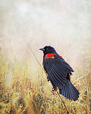 Morning Watch by Melinda Moore (Color Photograph)