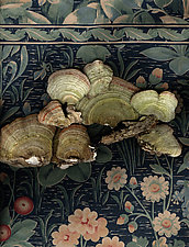 Mushrooms on Textile by Lisa A. Frank (Color Photograph)