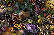 The Stillness of Monarchs by Lisa A. Frank (Color Photograph)