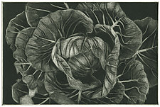 Cabbage by Barbara  Stikker (Etching)