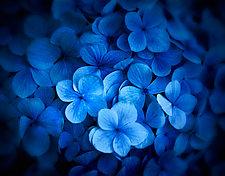 Kula Blues by Matt Anderson (Color Photograph)