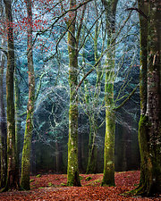 Into the Mystic by Matt Anderson (Color Photograph)