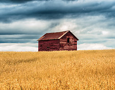 Old Barn in Summer by Matt Anderson (Color Photograph)