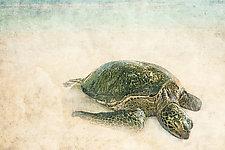 Sea Turtle I by Matt Anderson (Color Photograph)