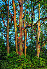 Painted Forest I by Matt Anderson (Color Photograph)
