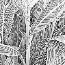 Canna Stalk and Leaves by Russ Martin (Black & White Photograph)