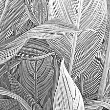 Canna Leaf Collage by Russ Martin (Black & White Photograph)