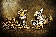 Jaguar Love by Melinda Moore (Color Photograph)