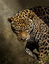 On The Prowl by Melinda Moore (Color Photograph)
