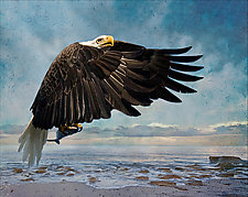 Fishing Eagle by Melinda Moore (Color Photograph)