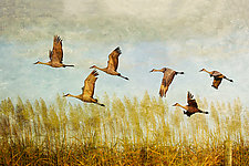 Cranes At Sunset by Melinda Moore (Color Photograph)