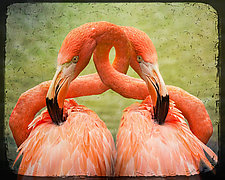Love Entwined by Melinda Moore (Color Photograph)