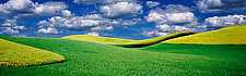 Palouse Wheat by Terry Thompson (Color Photograph)