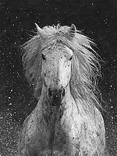 Splash by Carol Walker (Black & White Photograph)