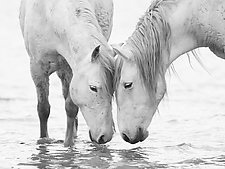 In the Water at Dawn II by Carol Walker (Black & White Photograph)