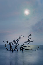 Edisto Moonrise by Richard Speedy (Color Photograph)