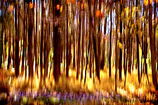 The Magic Forest by Richard Speedy (Color Photograph)