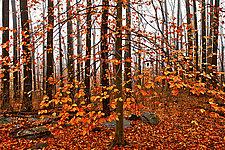 Catskill Fall by Richard Speedy (Color Photograph)