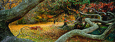 Potter's Tree by Richard Speedy (Color Photograph)