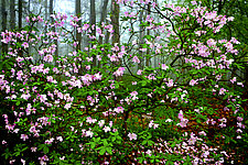 Sourland Mountain Spring by Richard Speedy (Color Photograph)