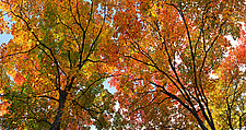 Beauty of Autumn by Terry Thompson (Color Photograph)
