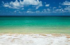 Tropical Splendor by Terry Thompson (Color Photograph)