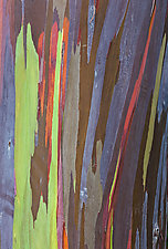 Rainbow Tree Bark I by Terry Thompson (Color Photograph)