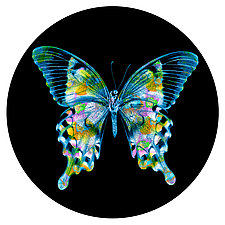 Butterfly Circle 1 by Dario Preger (Color Photograph)