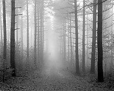 Path & Fog - Kettle Moraine by William Lemke (Black & White Photograph)