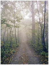 Fog Minooka by William Lemke (Color Photograph)