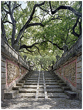 Stairway and Live Oaks by William Lemke (Color Photograph)