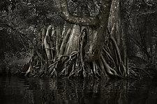 Savannah Swamp I by Greg Stroube (Black & White Photograph)