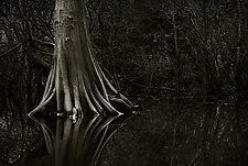 Savannah Swamp II by Greg Stroube (Black & White Photograph)