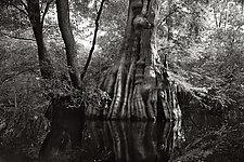 Savannah Swamp VI by Greg Stroube (Black & White Photograph)