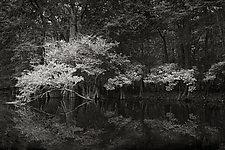 Savannah Swamp VII by Greg Stroube (Black & White Photograph)