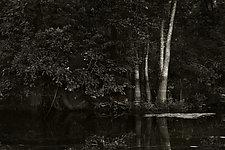 Savannah Swamp VIII by Greg Stroube (Black & White Photograph)