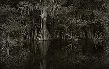 Savannah Swamp IX by Greg Stroube (Black & White Photograph)
