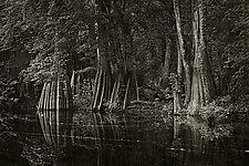 Savannah Swamp X by Greg Stroube (Black & White Photograph)