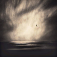 Three Seagulls by Gloria Feinstein (Color Photograph)
