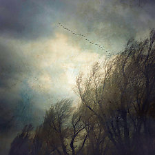 Trees and Snow Geese by Gloria Feinstein (Color Photograph)