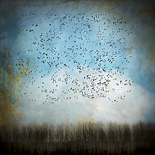 Snow Geese in Blue Sky by Gloria Feinstein (Color Photograph)