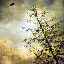Large Crow by Gloria Feinstein (Color Photograph)