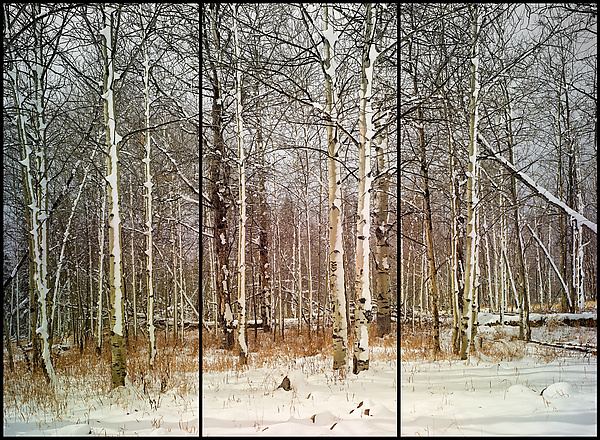 First Snow (Triptych)