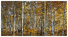 Last Leaves (Triptych) by James Bourret (Color Photograph)