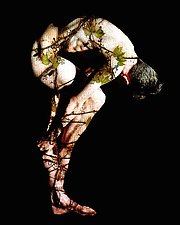 Flesh and Vine by Paul Mahder (Color Photograph)