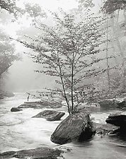 River Tree by Joseph Hyde (Black & White Photograph)