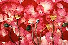 Untitled #28 by Debra Heimerdinger (Color Photograph)